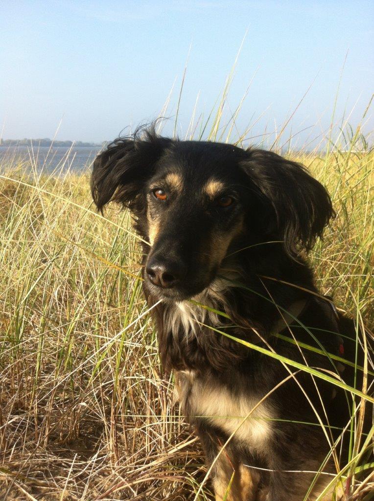 Hund Charly bei PETA