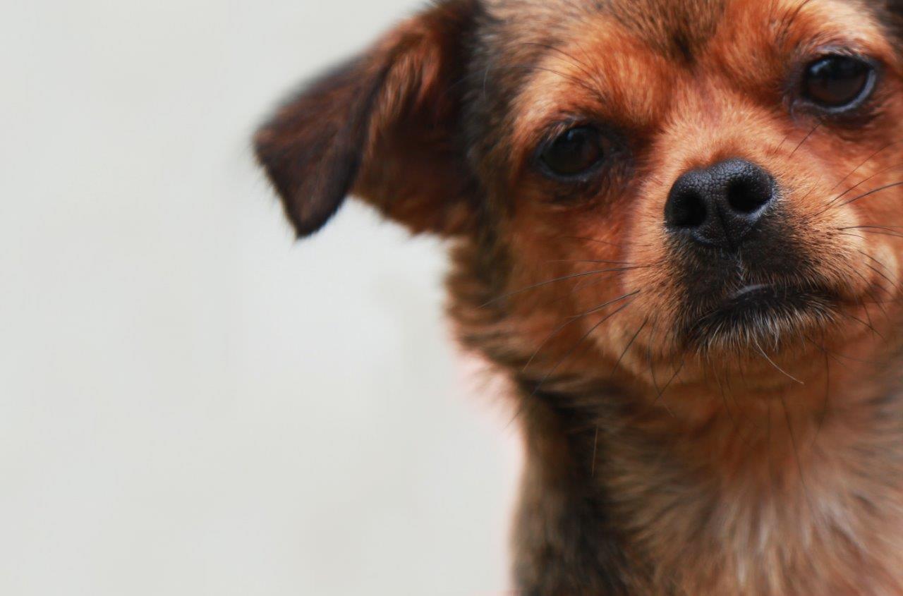 Hund Naika bei PETA