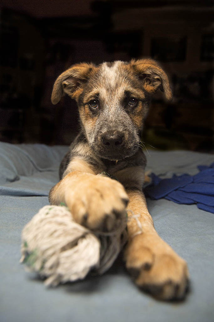 Hund mit Spielzeug