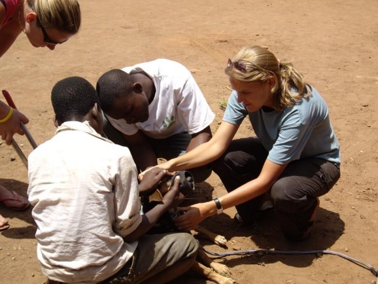Die Welt für die Tiere ein kleines Stückchen besser machen – als ehrenamtlicher Tierarzt