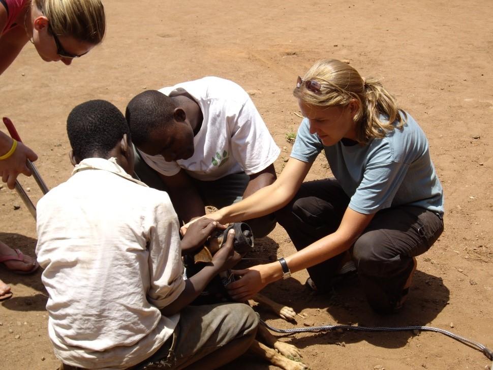 ehrenamtlicher tierarzt