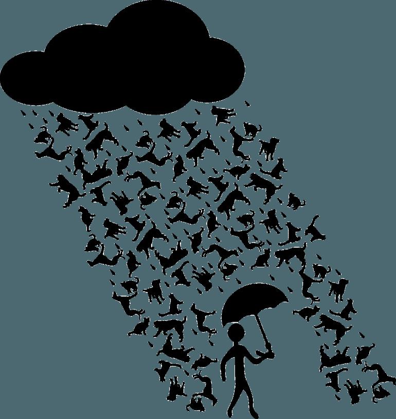 Regen, Sturm und Hundekacke