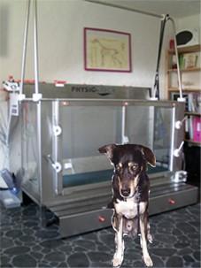 Wasserlaufband für Hunde