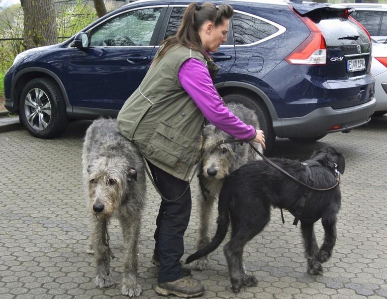 Auf Wolf und Hund gekommen –  mit Günther Bloch
