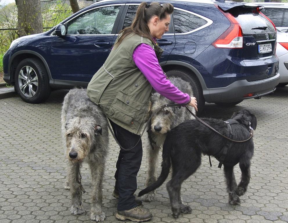 Bild1-Wolfshunde und Welpe