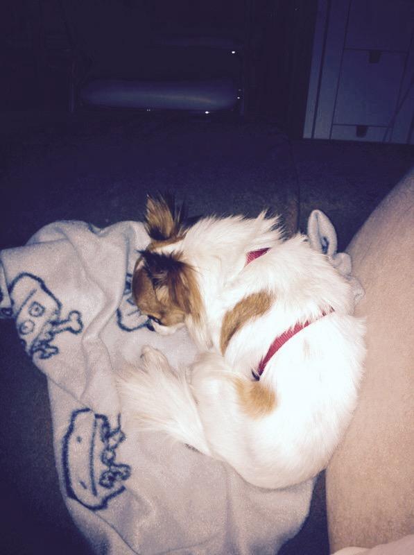 Hund Emlio liegt auf der Hundedecke