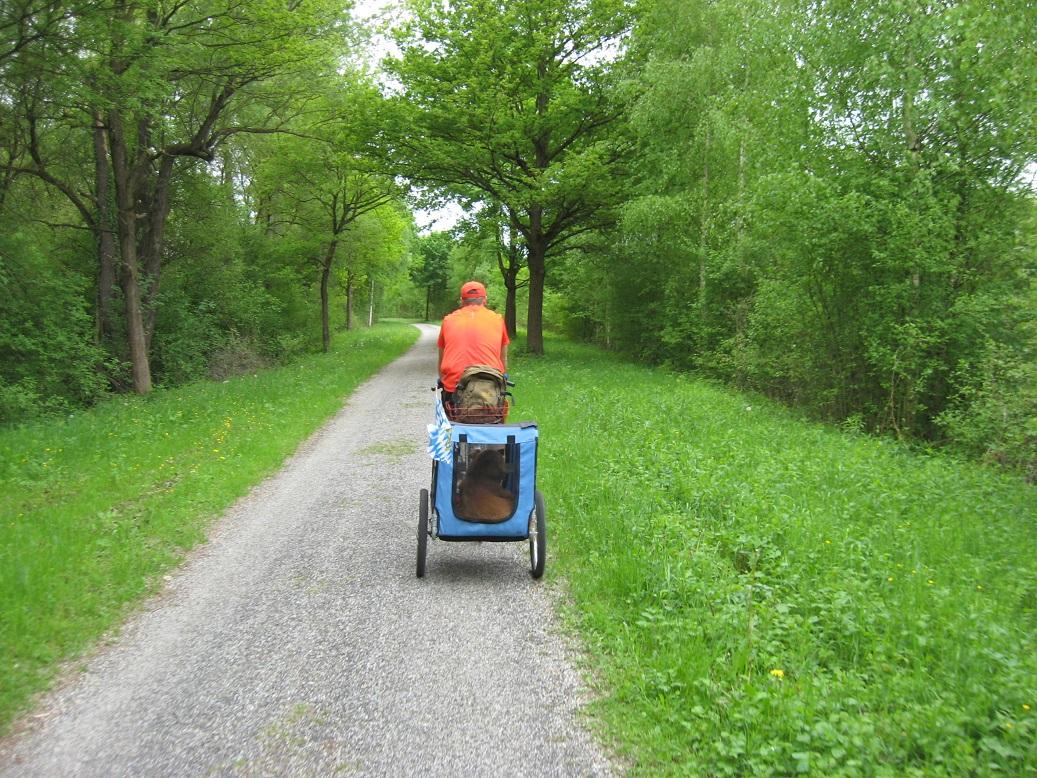 Hund wird im Anhänger transportiert