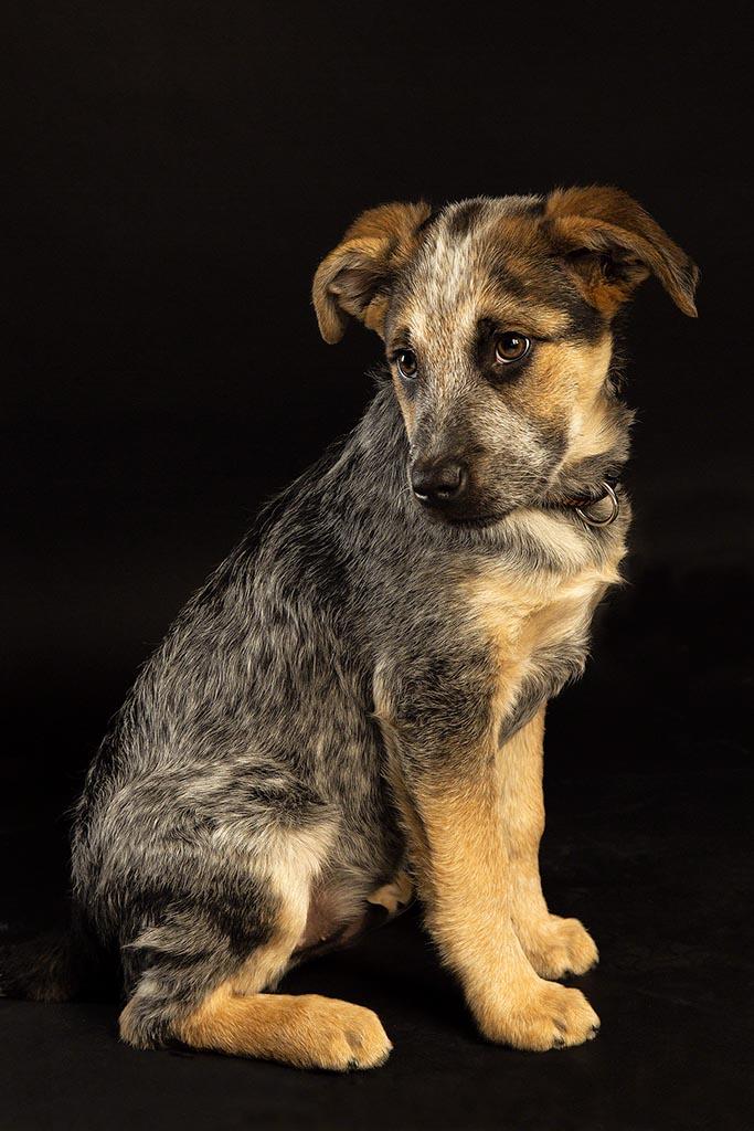 Süßer Hund im Portrait