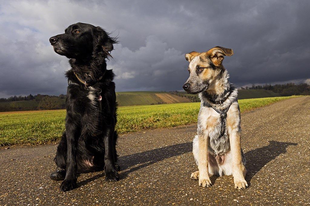 zwei Hunde vor stürmischer Wolkenkulisse