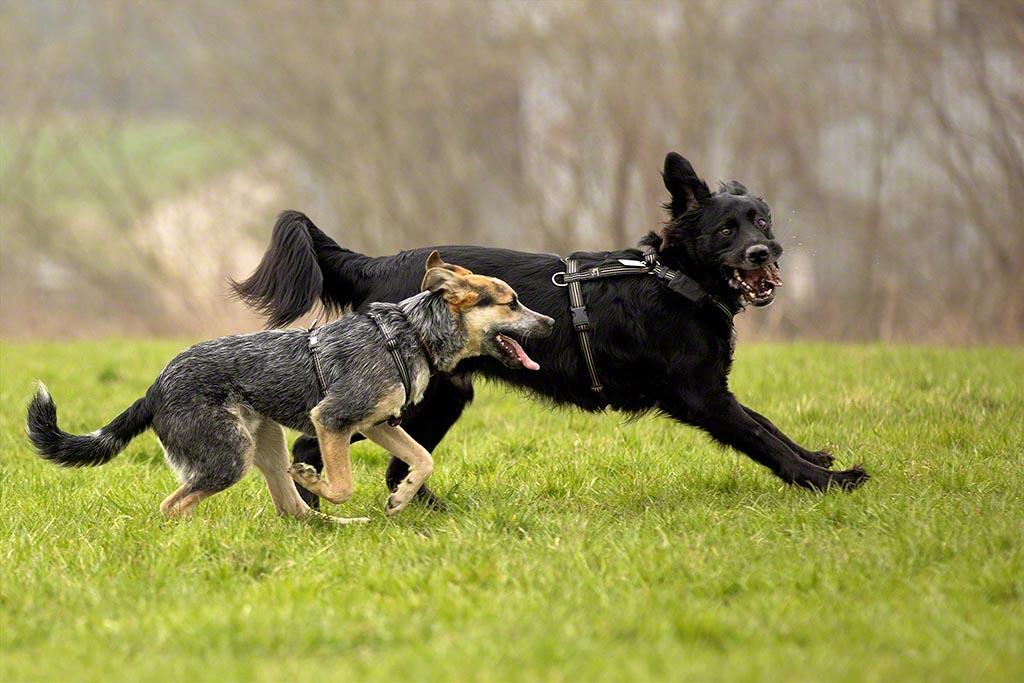 Lucca & Maxx sprinten nebeneinander her