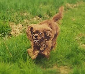 Hund Jack im Actionshot