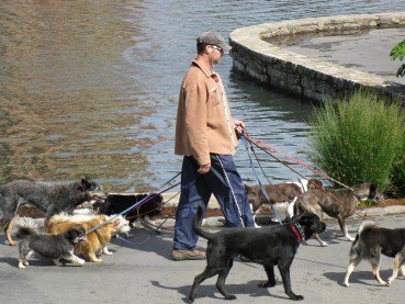 Tagesmutter für den Vierbeiner: Hundesitter
