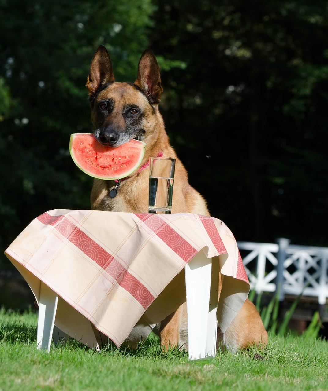 witzige Hundenamen findet man auch in Parks