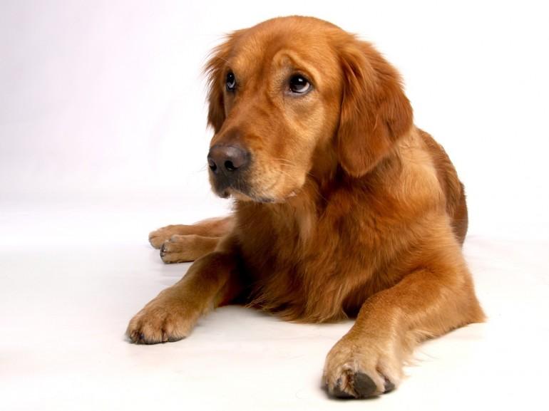 Schöne Hundenamen