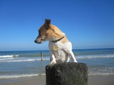 Kurze Hundenamen – Die Auswahl und Möglichkeiten