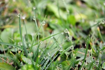 Wenn das Gras nass ist