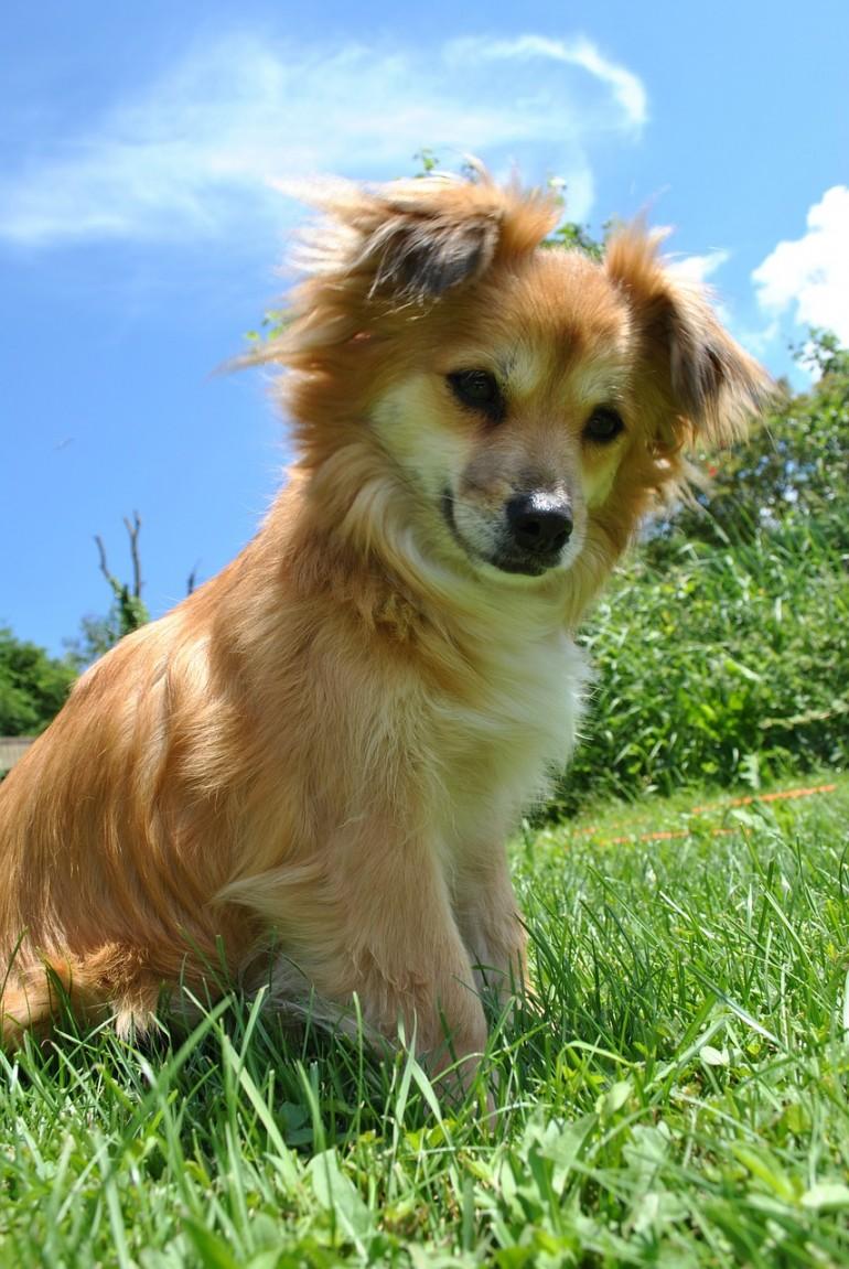 Jessie Dog Name