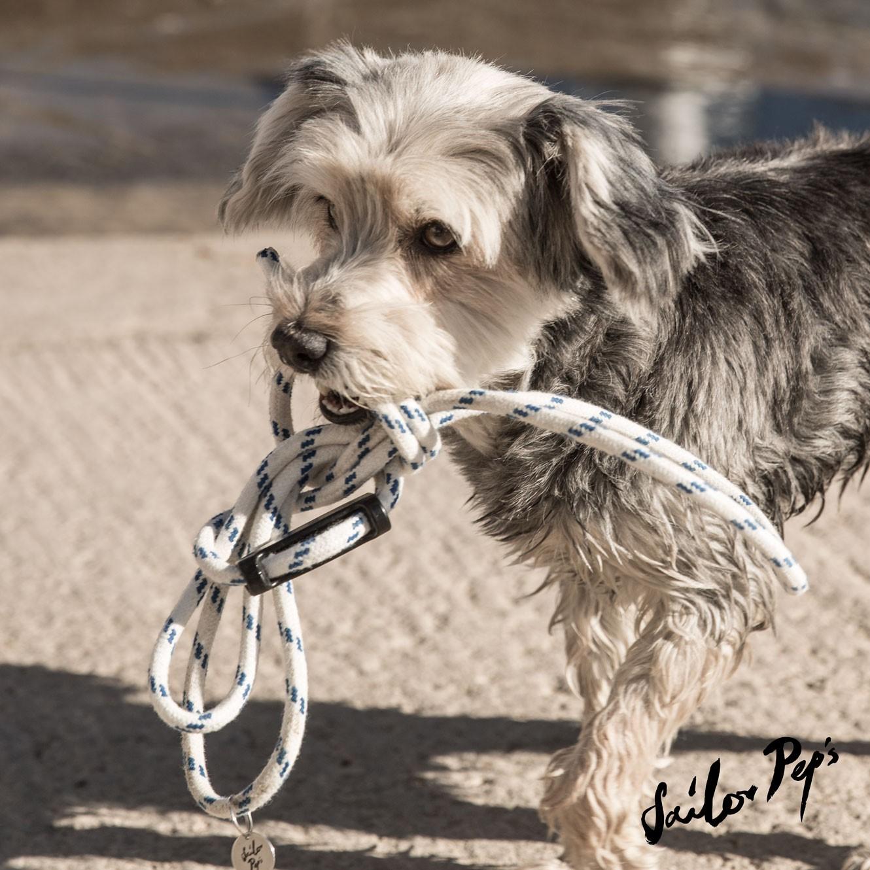 Sailor Peps Hund mit Hundeleine