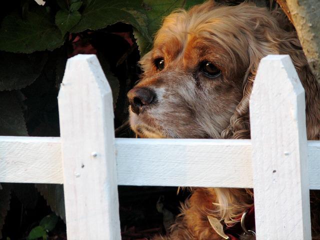 Mediation – eine sinnvolle Alternative bei Streit rund um den Hund