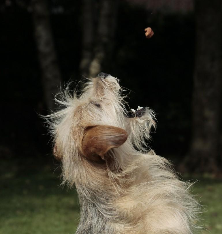Was eine gesunde und gehaltvolle Hundeernährung ausmacht