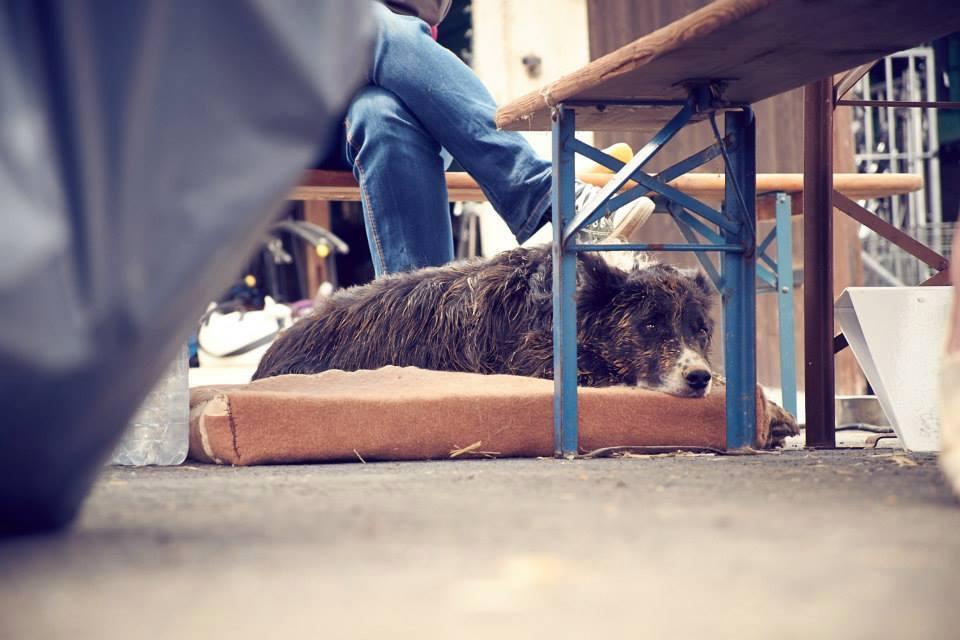 Hund bei Filmdreharbeiten am Warten