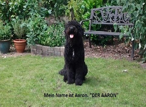 Hund Aaron im Garten