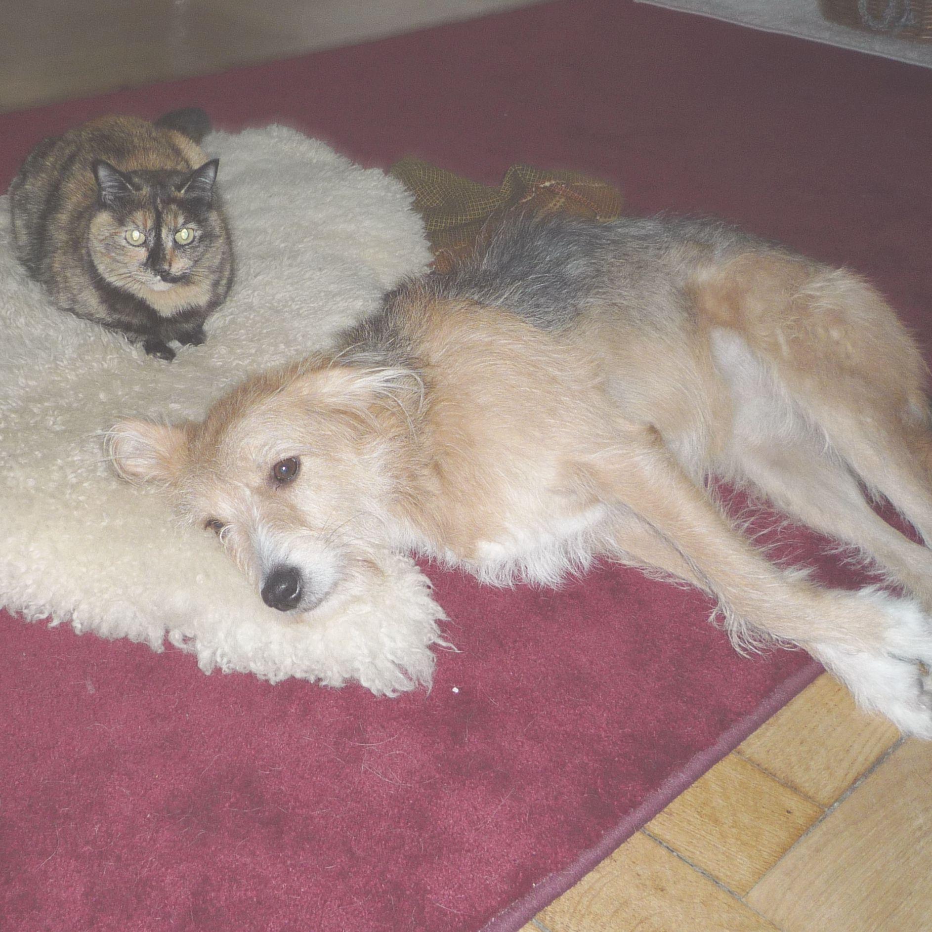Hund Bonny und Katze UHU