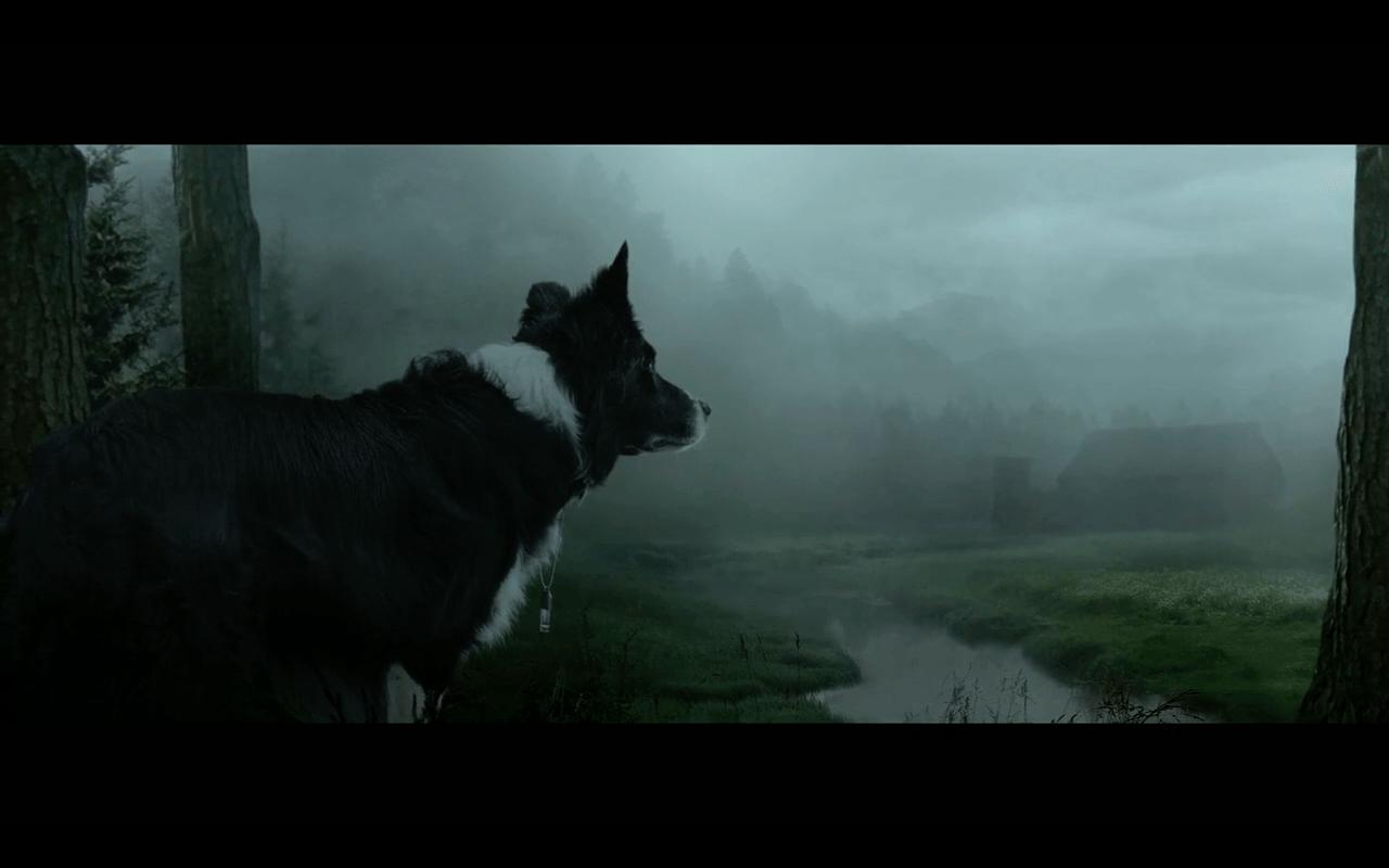 Hund im Kino Duke