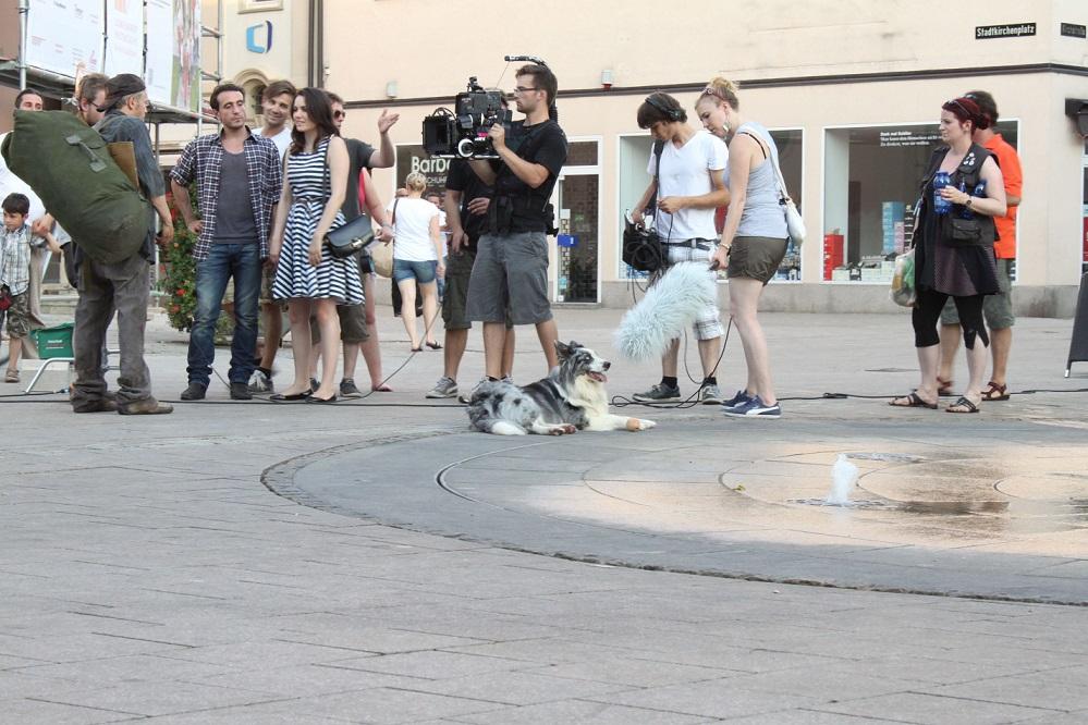 Hund als Komparse beim Filmdreh