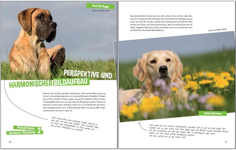 harmonischer Bildaufbau - Hundefotografie