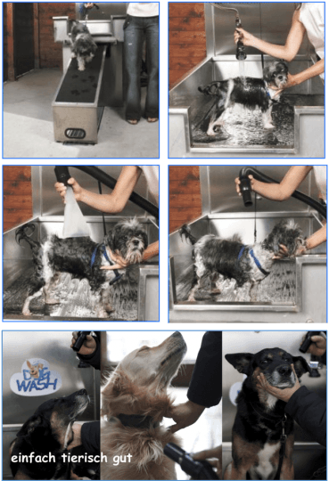 Sauberer Hund, glückliches Herrchen – das DogWash Gründerpotrait
