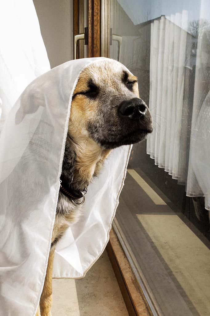 Hund vor Fenster