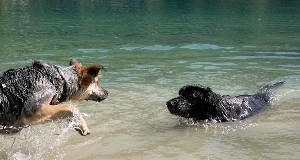 Lucca & Maxx im Wasser