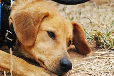Sommerzeit: Leidenszeit für Hunde und Tierheime