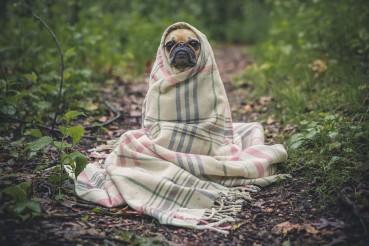 Das Geheimnis einer guten Hundedecke