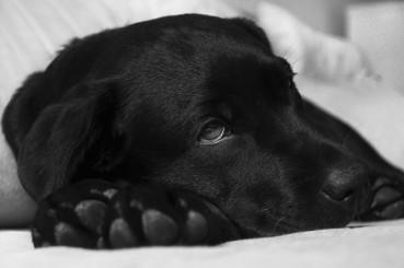 Typische Hundekrankheiten erkennen und behandeln