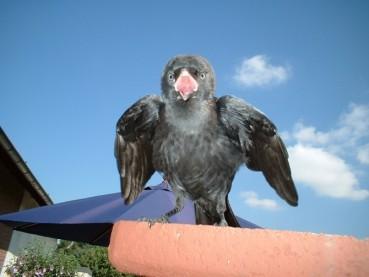 Am Anfang stand der Vogel