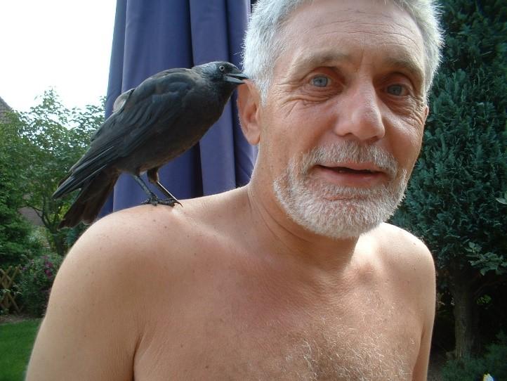 vogel 9