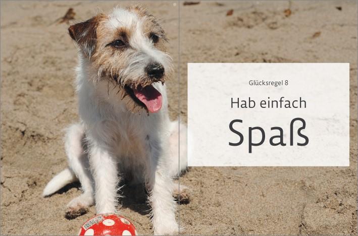 1 Hund am Strand