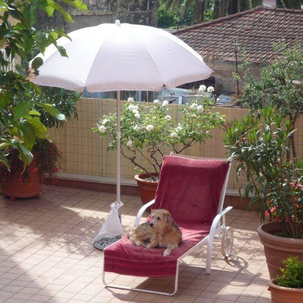 Hund Bonny unterm Sonnenschirm