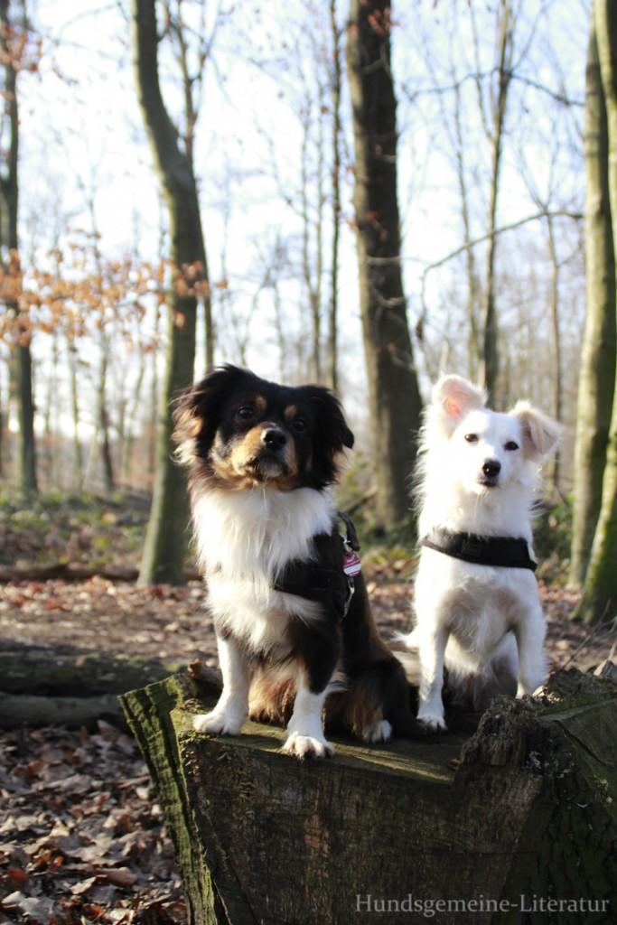 zwei Hunde im Wald