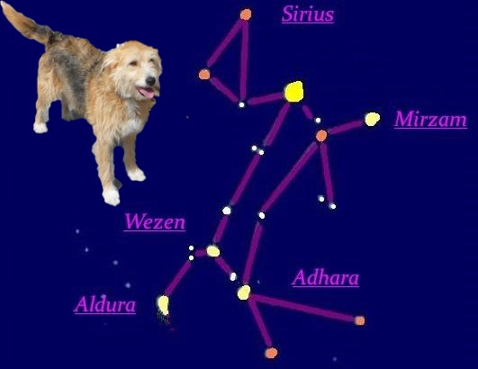 Sternbild großer Hund_Bonny