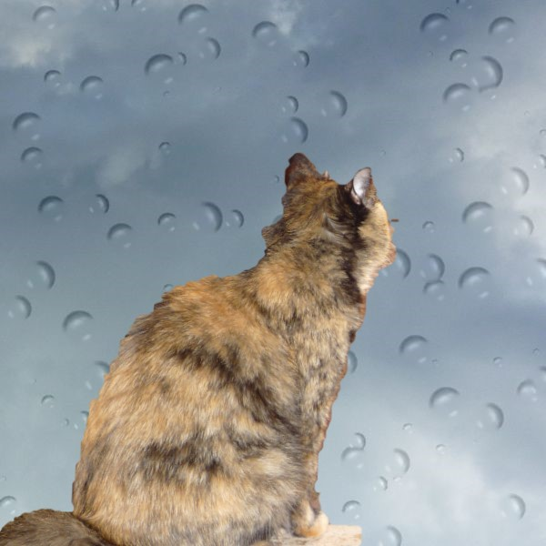 Katze UHU am Regen Fenster