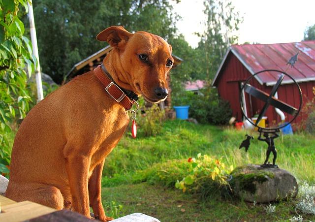 Hund in Ferienwohnung