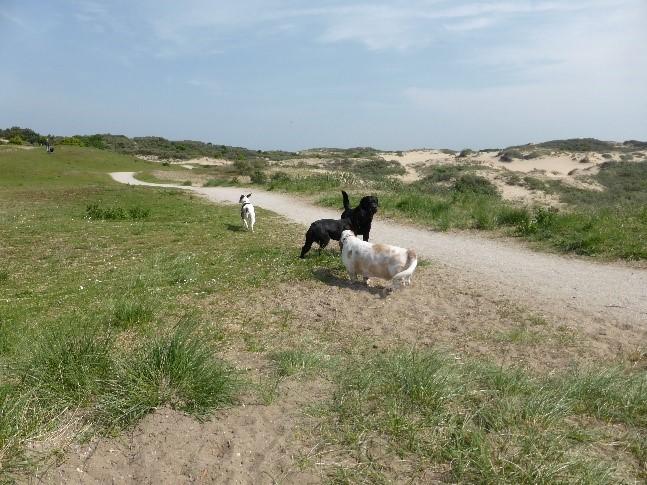Urlaub in Noordwijk - viele Hunde unterwegs