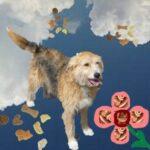 Bonny-Hundekuchen-Wurstblume
