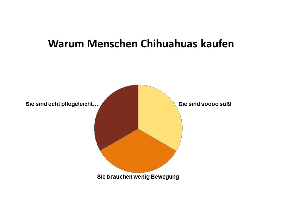 Gründe warum Menschen Chihuahuas kaufen