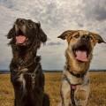 Maxx & Lucca auf dem Feld