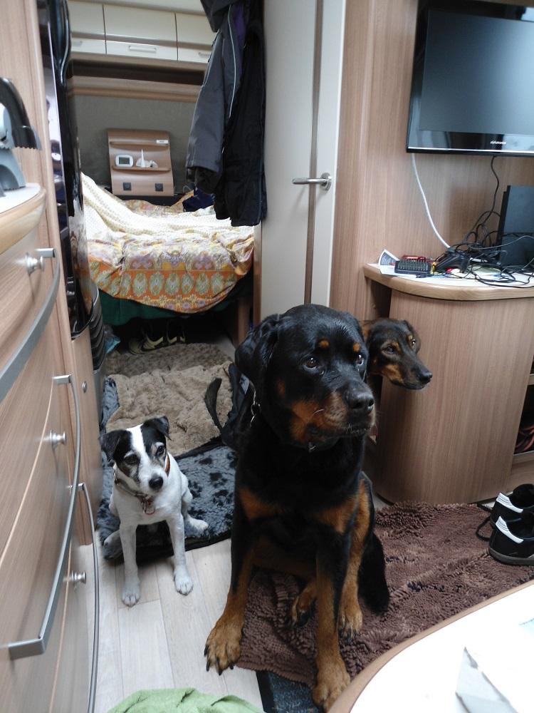 Hunde im Wohnwagen