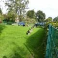 Bassets spielen im Garten